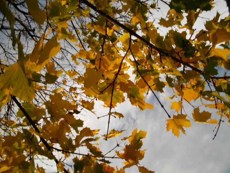 Blätter Herbst