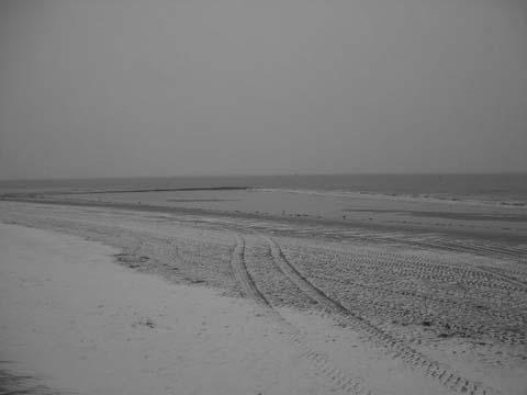 Graustufiges Foto vom nebeligen verschneiten Strand